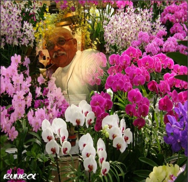 Salon de l orchid e a l ile de la reunion - Symbole de l orchidee ...